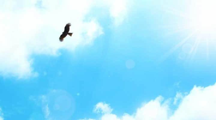 大空を羽ばたくストレスフリーな鳥