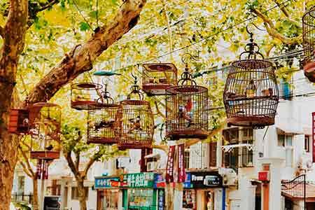 鳥かごに入れられた鳥たち