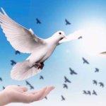 名曲『翼をください』&『鳥の詩』の歌詞からの気づき