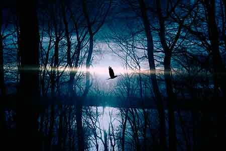 鳥かごから自由になった一羽の鳥
