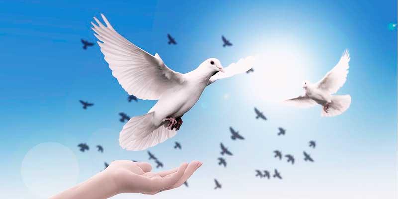 鳥が青空に羽ばたく様子