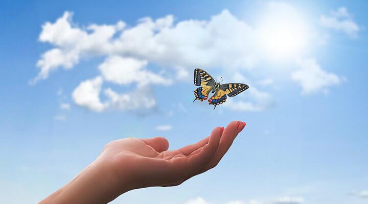 飛び立つ蝶