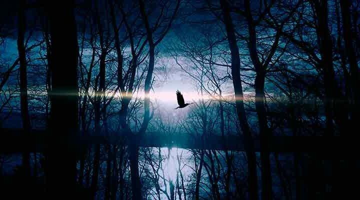 闇から抜け出す鳥