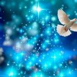 本当の自由とは、安心の籠を出て、心(魂)の川に身を委ねること