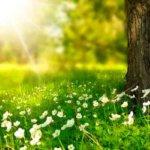 春分の日に人生の見直しを – それが人生を永遠の春へと導く