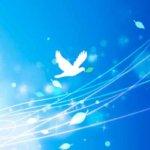 執着や依存を手放し、軽やかに変化する – 鳥カゴから出る時