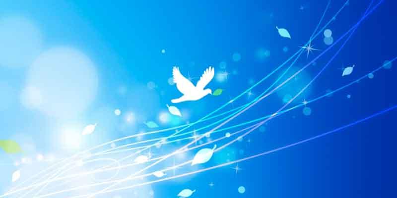 自由に羽ばたく鳥