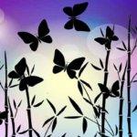私たちは『サナギ』 – サナギから蝶となり、羽ばたくには