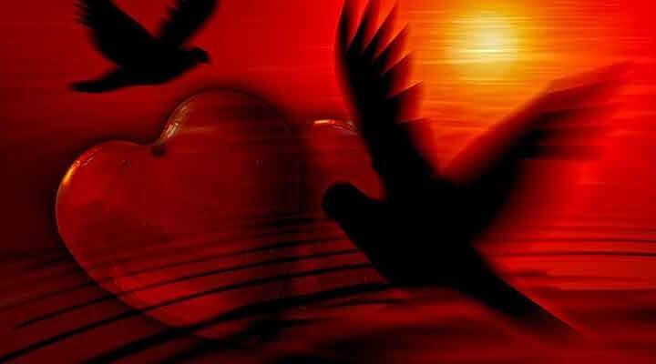愛で下支えする自由な鳥