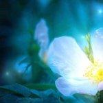 世界で一つだけの花を咲かせる時 – 自己表現で皆を幸せにする