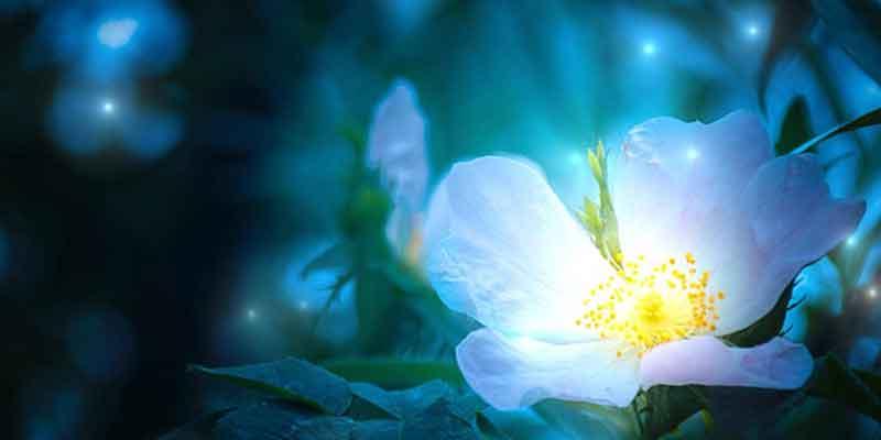 世界で一つだけの花