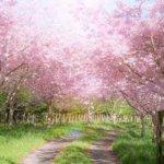 信じるところに道ができ、愛の種を蒔き、尽くすところに花が咲く